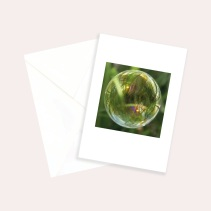 Sukkulenten-Sammlung «Seifenblasen auf Reisen» Cornelia Aschmann